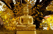 The Golden Buddha Under The Bodhi Tree.