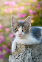 Kitten Resting On A Rock In Fr...