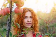 Charming Red Hair Woman, Portrait In Apple Garden On The Background Of Twigs With Red Apples, Evening Sun Rays