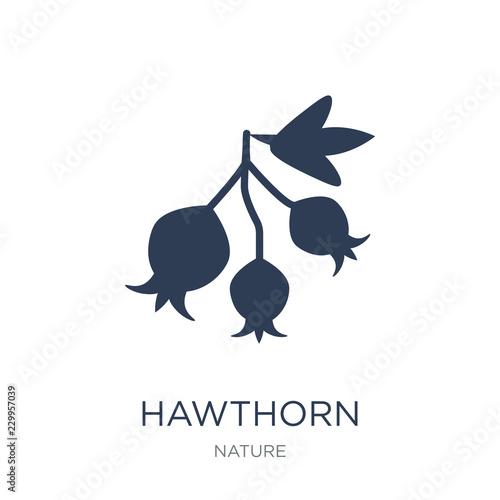 Fotografie, Obraz Hawthorn icon