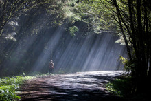 A Young Woman Walking On A Road Through A Forest Filled With Fog And Sunlight