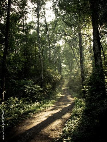 Poster Weg in bos leśna ścieżka