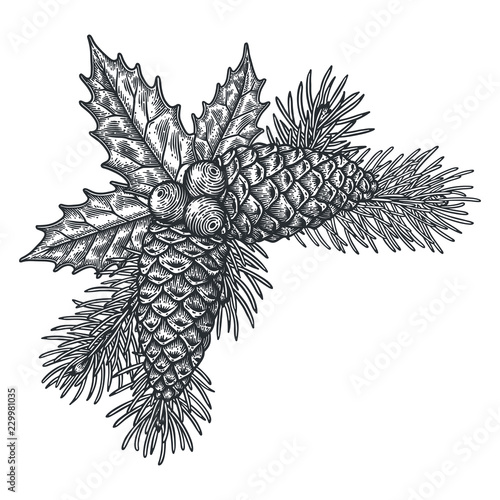 Fotografie, Obraz  Hand drawn Holly berry with fir branches vector illustration.