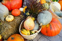 Display Of Colorful Decorative Heirloom Pumpkins And Gourds In The Fall