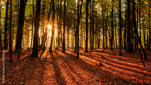 Fototapeten Wald Sun rays and shady leading lines in the woods / Herbstwald in der Südheide mit markanten Sonnenstrahlen