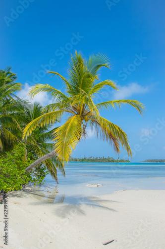 Foto auf Gartenposter Strand San Blas Island