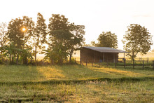 Rural Scene With Sunlight In The Morning, Nakhonratchasima, Thailand