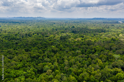 Aerial drone view of the tree canopy of dense tropical rainforest Fototapeta