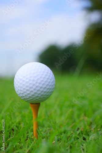 Poster Golf Golf ball and tee on golf green course background