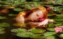 Zarte Junge Sexy Rothaarige Frau Ophelia Schwimmt Spielt Sinnlich Sensibel Verführerisch Im Wasser, See, Teich, Sumpf Mit Rosa Seerosen.