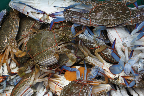group of captured living Freshwater crab, banded shell animal in ocean fresh market seafood restaurant, pregnant seafood, delicious gourmet