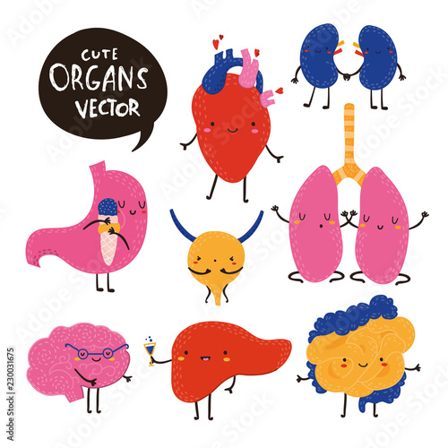Cute vector human organs. Hand drawn collection. All elements are isolated