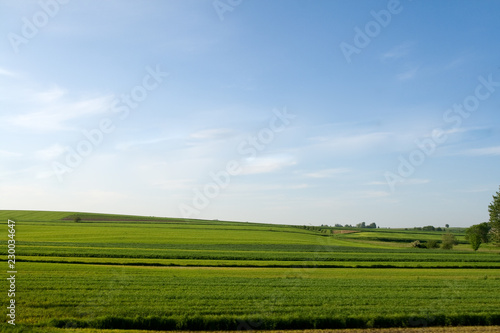 Fotobehang Cultuur landscape with green field and blue sky