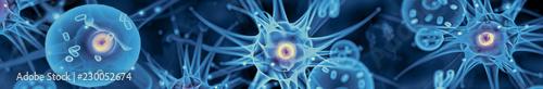 Fotografia  Active nerve cells
