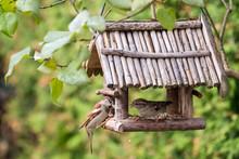 Heimische Vögel Bei Der Fütterung