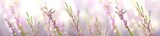 Fototapeta Kwiaty - Horizontal banner with lavender flower and butterfly