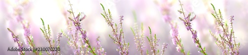 Photo  Horizontal banner with lavender flower and butterfly