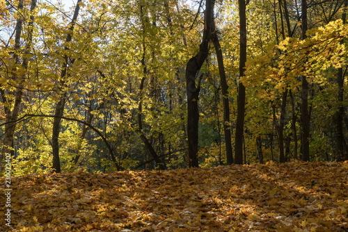 Золотая осень в старинном  парке. © kedrova