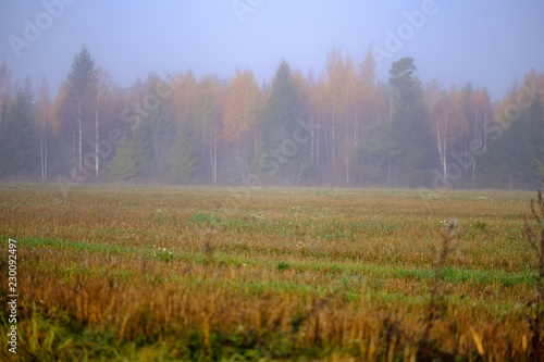 Tuinposter Lavendel lonely autumn trees hiding in mist