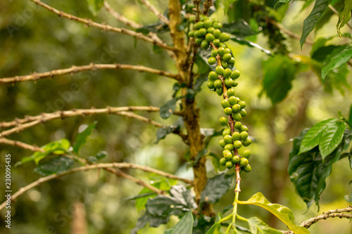 Printed kitchen splashbacks Birch Grove Green coffee beans background