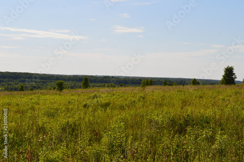 Spoed Foto op Canvas Blauwe hemel landscape with wheat field and blue sky
