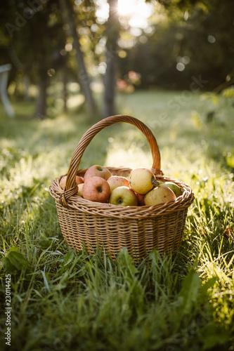 Fotografie, Obraz  basket full of apples