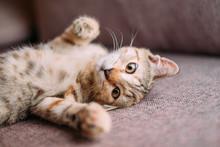 Cute Kitten Of Tiger Color Lyi...