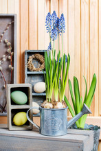 Bluebells (muscari) Flowers An...