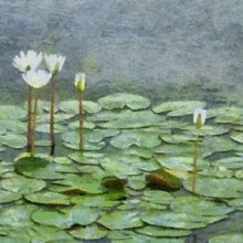 Hand Drawing Watercolor Art On Canvas. Artistic Big Print. Original Modern Painting. Acrylic Dry Brush Background. Green Lily Flower On Water Of Lake.
