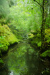 Green Forest Nature