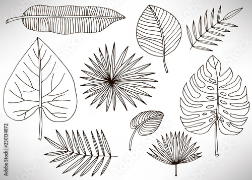 Tropical Leaves Set Plants Isolated On White Background Big Set Of Black Hand Drawn Thin Line Cute Doodle Floral Icons Flowers Design Element Collection Isolated On White Vector Illustration Buy This Autumnal leaves doodle patterned on brown mobile phone wallpaper vector. tropical leaves set plants isolated on