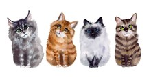 Cute Watercolot Cats Set