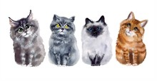 Watercolor Cute Cats On The White Background. Watercolor Funny Sketch Cats. Art Illustrations Sketch. Illustration, Isolation Objects For Your Design