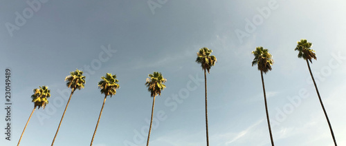 Stickers pour porte Palmier Classic Los Angeles palm trees in 2.40:1 aspect ratio