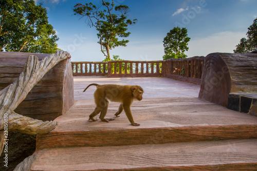 Foto op Plexiglas Aap Thailand. Phuket A monkey. Rest in Thailand. Animals in Asia.