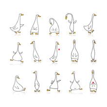 Funny Goose Set, Sketch For Yo...