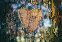 Photo Of Old Tree Trunk With H...
