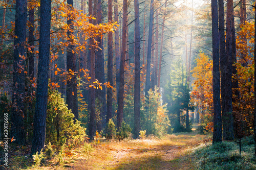 Fototapeten Wald Clean environment