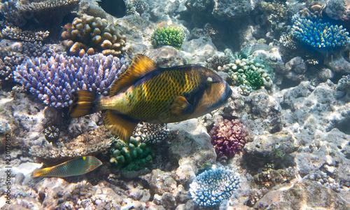 Fishes in corals. Underwater world. #230178612