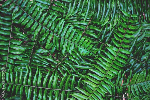 Ingelijste posters Tropische Bladeren Green fern texture detail background