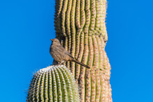 Bird In A Cactus