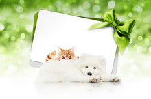 Merry Christmas Signboard Or Gift Card For Pet Shop Or Vet Clinic, White Dog And Ginger Cat Pets Isolated On White Card With Green Ribbon Bow On Blurred Green Xmas Lights, Copy Space Blank Background