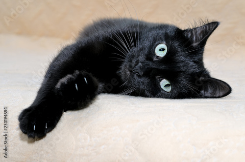 Leinwand Poster Black cat snugly lying on a plaid stretching its paws