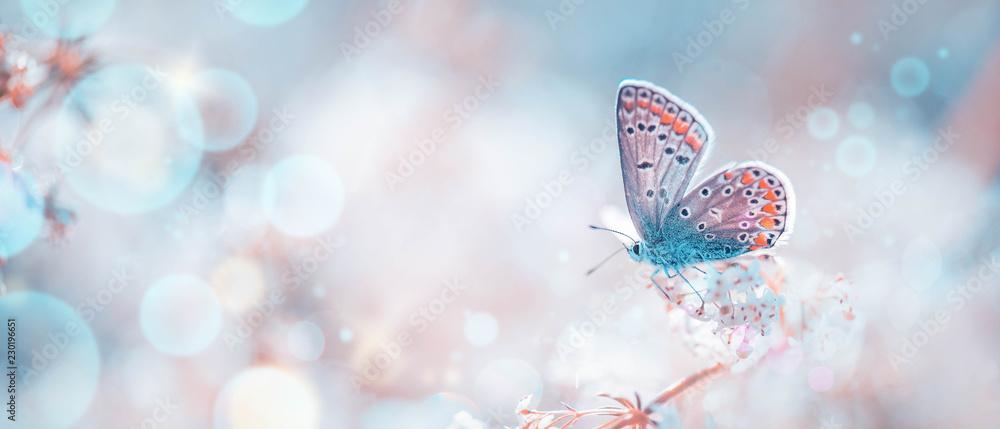 Fototapeta Schmetterling auf Frühlingswiese