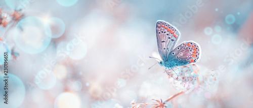 Deurstickers Vlinder Schmetterling auf Frühlingswiese