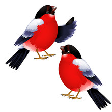 Two Bullfinch Isolated On White Background. Vector Cartoon Close-up Illustration.