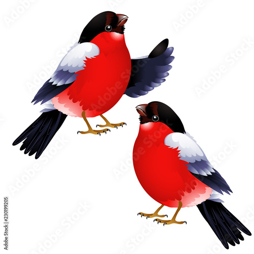 Two bullfinch isolated on white background Wallpaper Mural