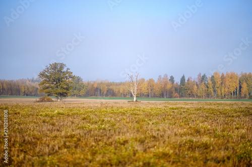 Foto auf Gartenposter Landschappen empty field in late autumn