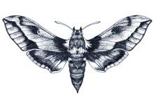 Hand Drawn Butterfly Tattoo. Dotwork Tattoo. Hummingbird Hawk Moth. Macroglossum Stellatarum. Lepidoptera.