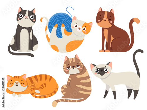 Obraz Cute cats. Fluffy cat, sitting kitten character or domestic animals isolated vector illustration collection - fototapety do salonu